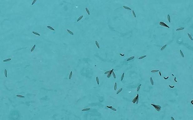 Termite Pool Pipe Repair